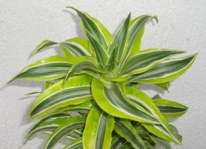 choices for air purifying indoor plants for small apartments